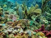 Snorkeling in San Blas Panama to Colombia 082