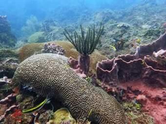 Snorkeling in San Blas sailing trip Panama to Colombia 084